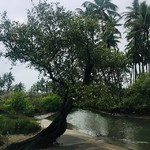 @instagram: Agonda in monsoon :)