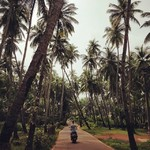 @instagram: Me and my scooty ???? exploring Goan palm trees ????????????????