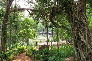Spice Plantations in Goa